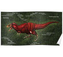 Tyrannosaurus Rex Muscle Study Poster