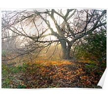 Tree In October Poster