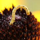 Inch Worm by Sheryl Hopkins
