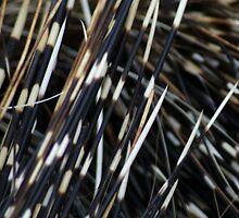 Porcupine Quills by billiebowler