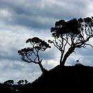 Pohutakawa Tree - NZ by Jenny Dean