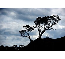Pohutakawa Tree - NZ Photographic Print
