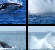 Humpback Whales Breaching 1 Sticker
