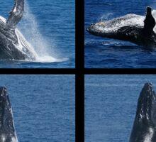 Humpback Whales Breaching Sticker