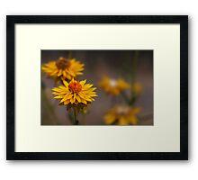 Tiny Wildflowers Framed Print