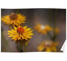 Tiny Wildflowers Poster