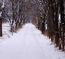 Snowy Drive on a Winter Morning by timmcmurdo