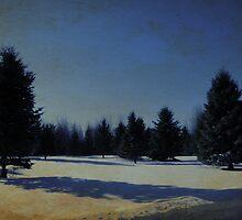 Spruces by lumiwa