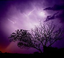 Lightning Tree by Penny Kittel