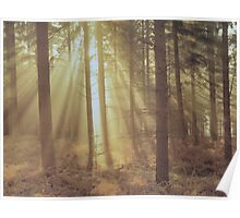 Sunlight through the trees. Poster