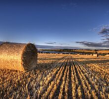 After the Harvest by Nigel Bangert
