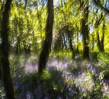 Dizzy Bluebell Wood by Heidi Stewart