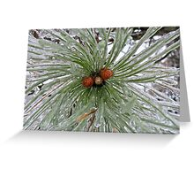 Frozen Pine Cones  Greeting Card