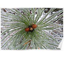 Frozen Pine Cones  Poster