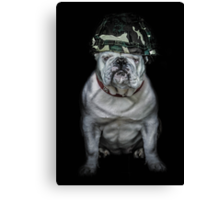 Private Bulldog 2 Canvas Print