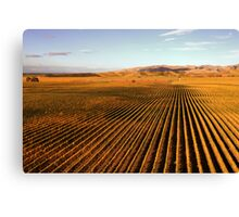 Autumn Vineyards Canvas Print