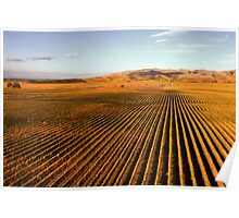 Autumn Vineyards Poster