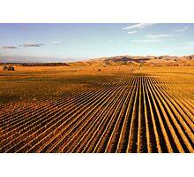 Autumn Vineyards Photographic Print