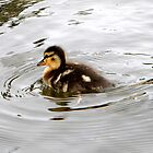 Duckling by thedustyphoenix