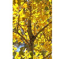 Yellow! Photographic Print