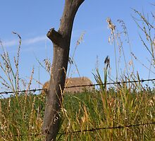 Forked Fence Post by Kathi Arnell