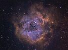 The Rosette Nebula by astrochuck