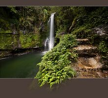 Kaiate Fern Gully steps to Heaven by Ken Wright