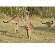 Kangaroo 2 Photographic Print