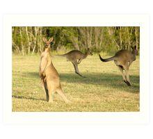 Kangaroo 3 Art Print