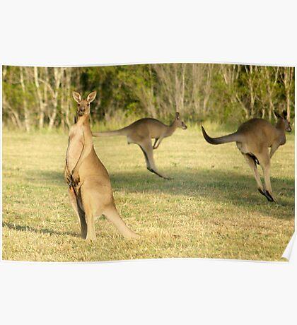 Kangaroo 3 Poster