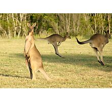Kangaroo 3 Photographic Print