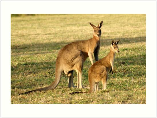 Kangaroo 4 by Gotcha29