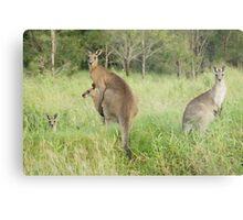 Kangaroos 6 Metal Print