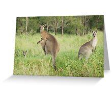 Kangaroos 6 Greeting Card