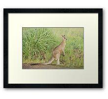 Kangaroos 7 Framed Print