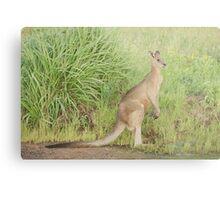 Kangaroos 7 Metal Print
