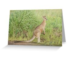 Kangaroos 7 Greeting Card