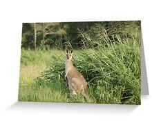 Kangaroo 10 Greeting Card