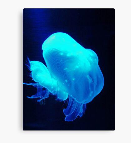 Jellyfish in Blue Canvas Print