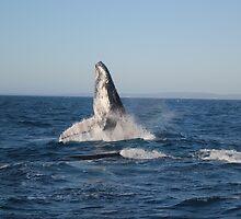 Graceful Giants of the Deep by Kaylene Passmore