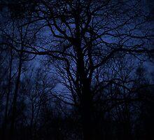 Nighttime by mrsaraneae