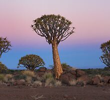 Quiver Tree Forest by Ashley Crookes
