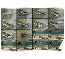 Saltwater Crocodile Collage 1 Poster