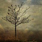 Little Tree by Sarah Jarrett