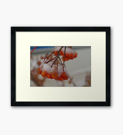 Snowy Berries Framed Print