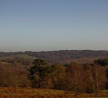 Ashdown Forest, Sussex, England by MisterD