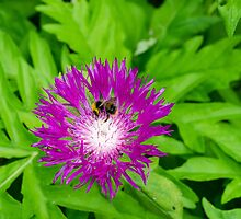 Purple flower being pollinated by a bee by RealWorldStu