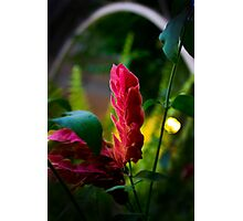 Surreal Flower Photographic Print