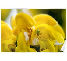 Yellow flower, with green spider and spider web Poster