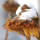 Snowladen by Kathi Arnell